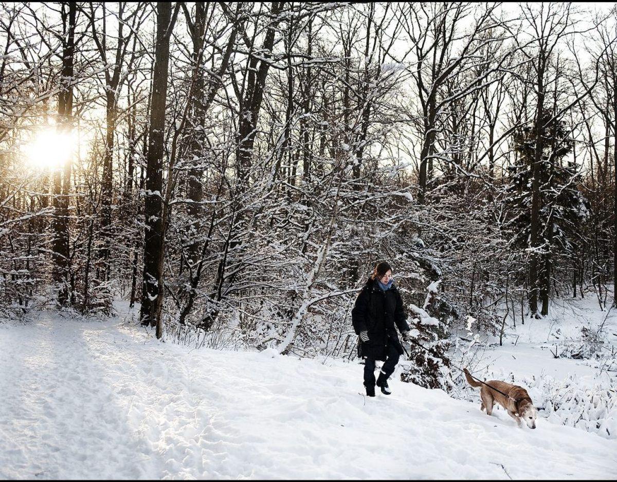 Hvid jul i Danmark – her i 2009 – er en sjældenhed. Har du styr på, hvornår vi har haft det? Klik videre og se alle årene siden 1900. Foto: Scanpix