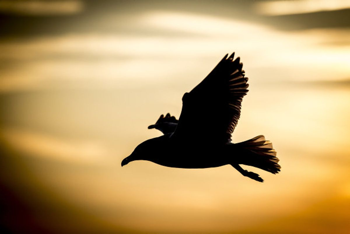 Der er fundet fugleinfluenza i flere vilde fugle i Europa. (Arkivfoto) Foto: Mads Claus Rasmussen/Scanpix