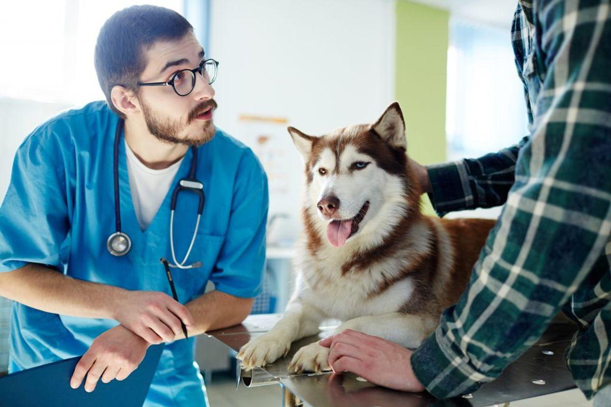 Din hund kan få parainfluenza, også kendt som kennelhoste. Sygdommen får hunden til at hoste og nyse. Kan behandles med antibiotika. KLIK og se andre farlige sygdomme, symptomer og behandling. Genrefoto.