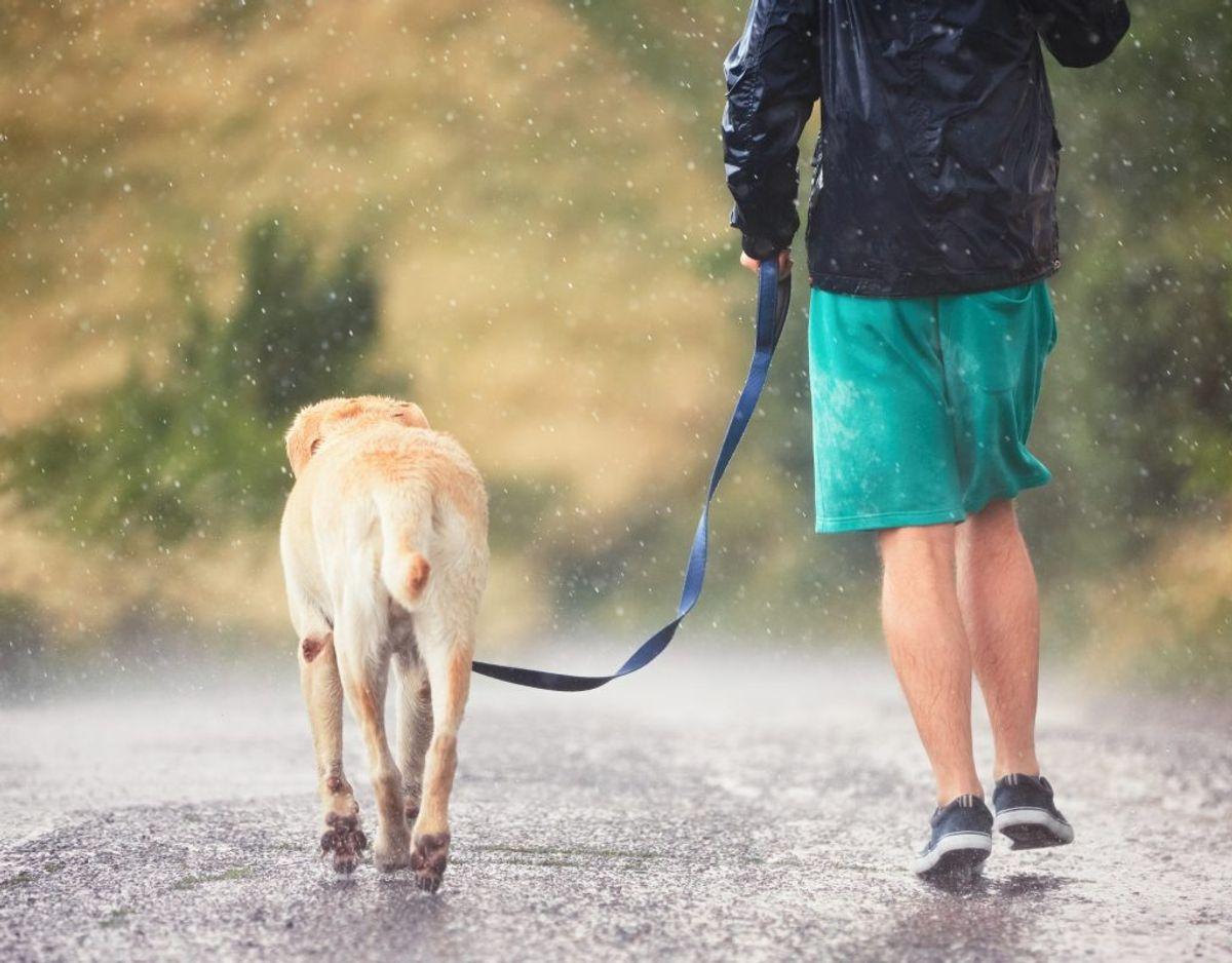 Din hund kan få giardia, der giver dem diarré. Kan behandles med antibiotika. Genrefoto.