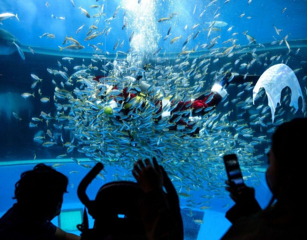 Tilskuerne ser på mens det er snacktid for hajerne. Foto: Philip FONG/Scanpix.