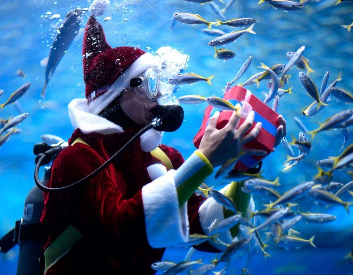 Det er jo snart jul – selvom man er en haj. Foto: Philip FONG/Scanpix.
