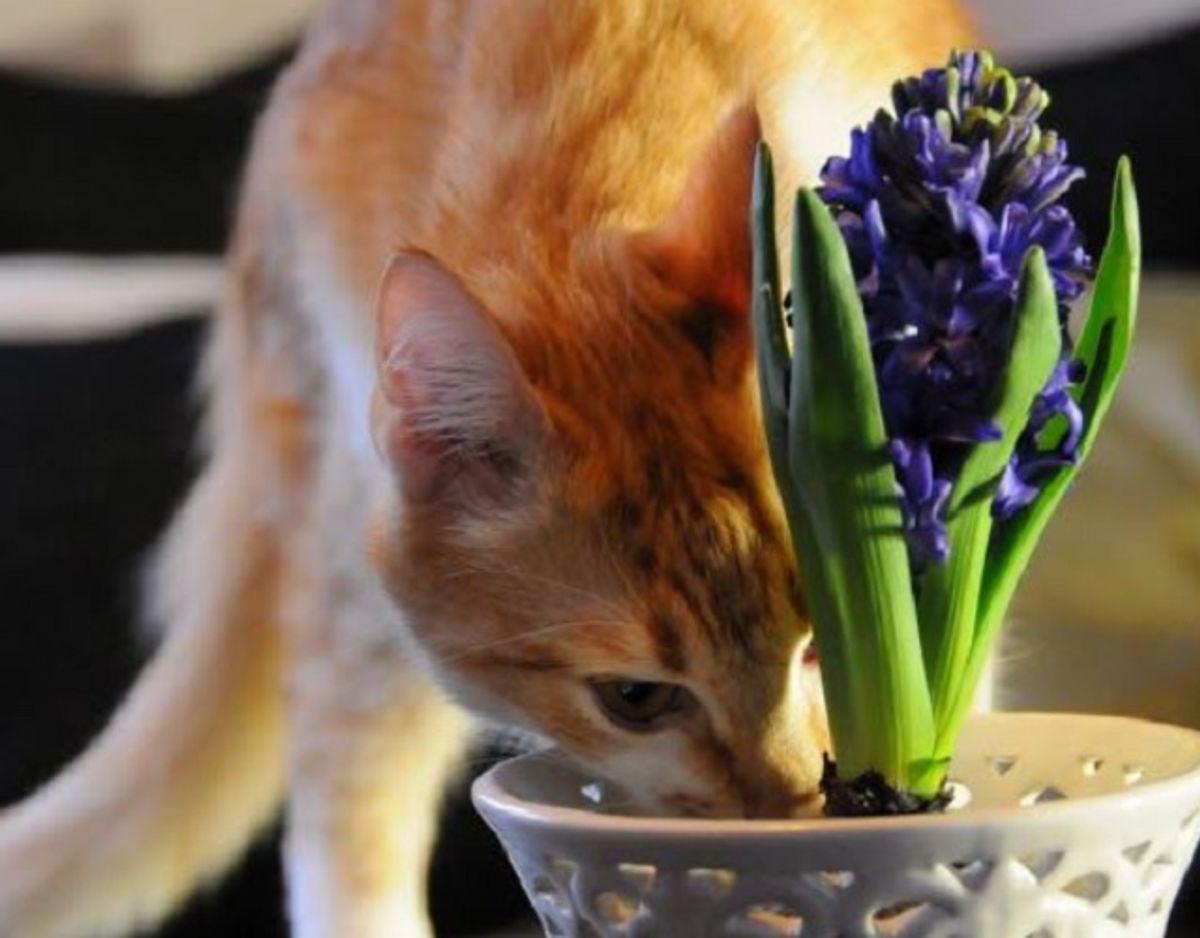 Mange katte er nysgerrige – det kan koste dem livet. KLIK og se listen over de giftige planter og blomster. Foto: Fotograf: Foto: Karianne Widsel.