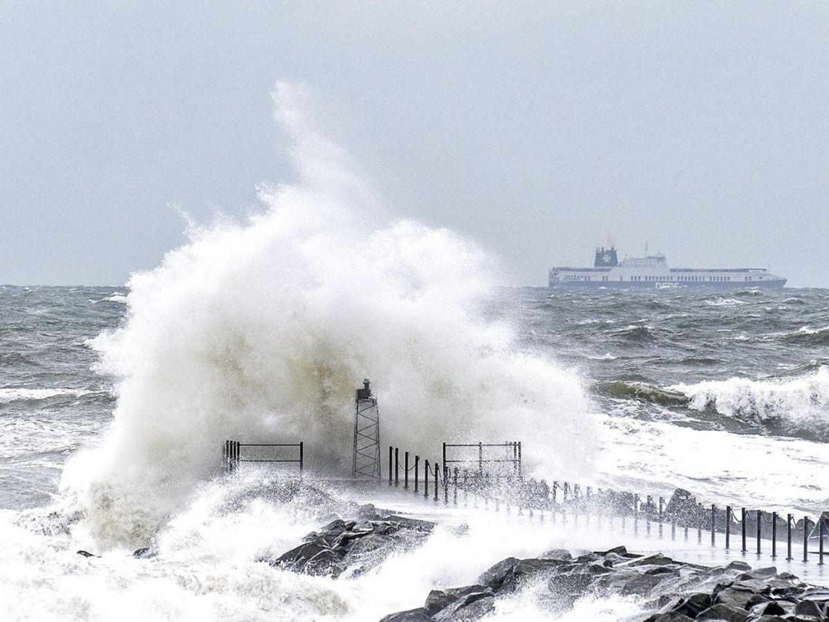 Eller vindstød af stormende kuling, der kan resultere i høje bølger på vandet og knækkede grene på kørebanen. Foto: Henning Bagger/Ritzau Scanpix