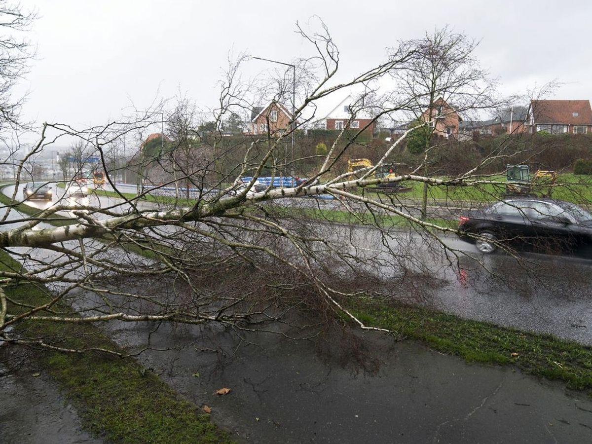 Det er usikkert, hvor kraftigt det bliver. Dog er der risiko for vindstød af orkanstyrke. Foto: Claus Fisker/Ritzau Scanpix