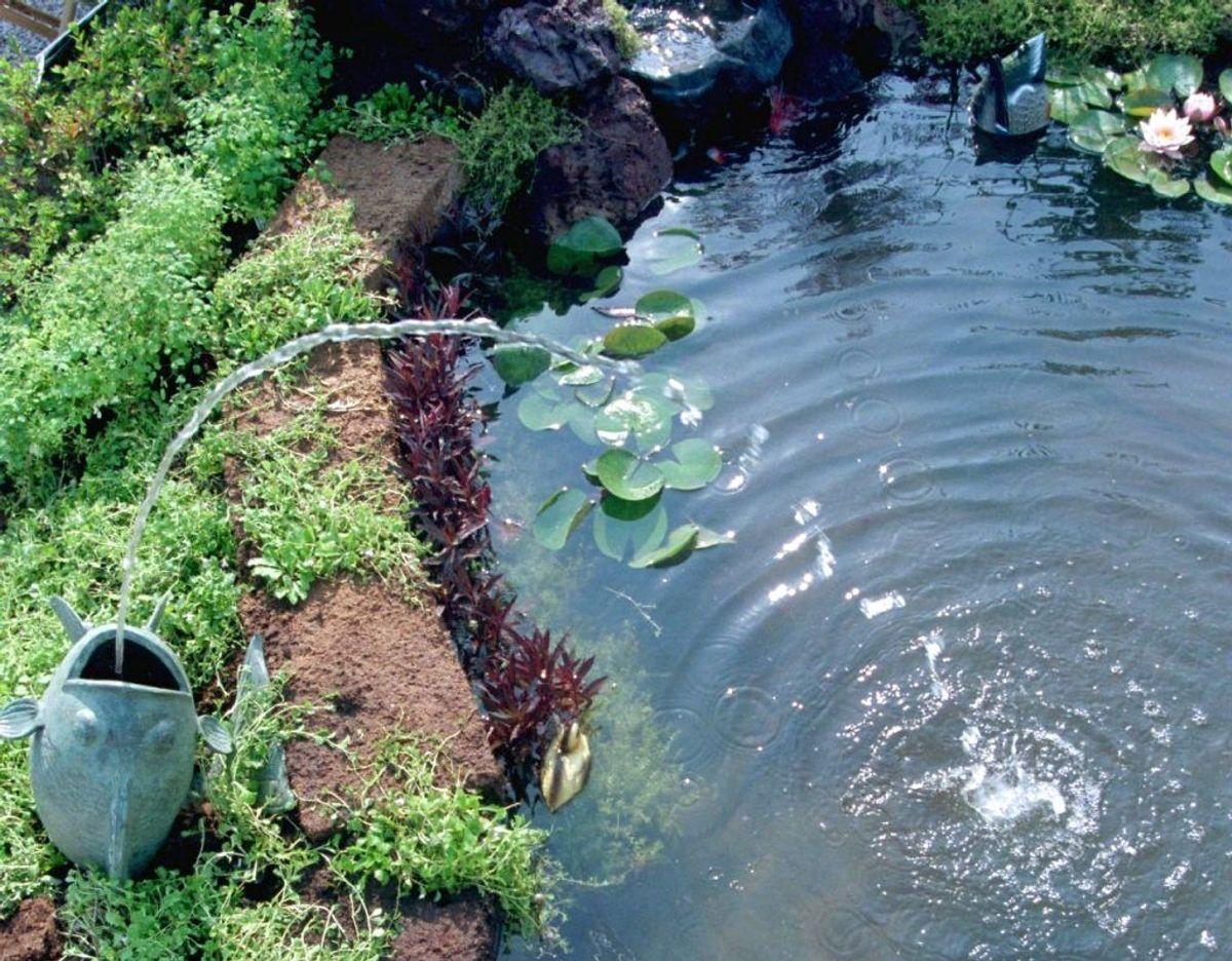 Havedammen skal også have en tur i efteråret. Tag pumpen op, så den ikke ødelægges af frost medmindre den står dybt nok til at overleve. Tag faldne blade og andet op af dammen, læg et net over, så du sikrer dig at mindst mulige blade lander i dammen. Kilde: Plantorama Foto: Scanpix