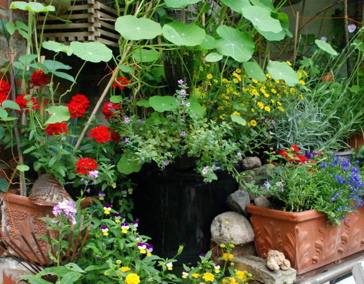 Løft dine krukker i haven, så de står på et par klodser eller lignende inden, der kommer nattefrost. Tøm dem for sommerblomster. Kilde: Bolius Foto: Scanpix