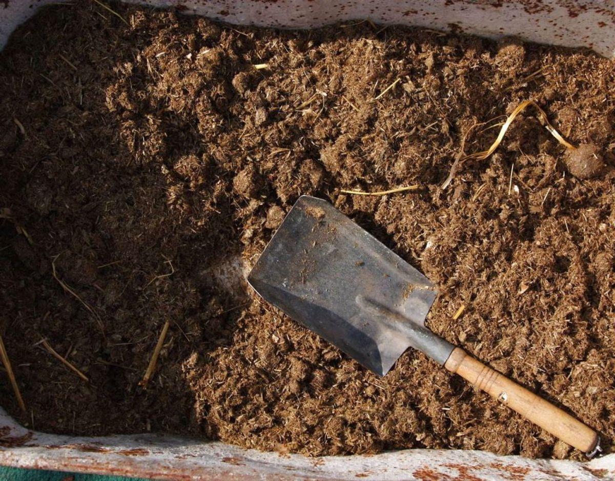 Strø kompost ud i haven. Det kan bruges i rosenbedet, i bede under træer og buske eller i bede med skovbundsplanter eller omkring hækken. Foto: Scanpix