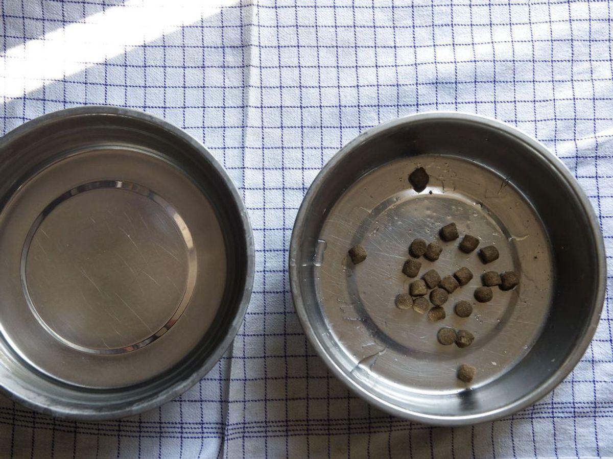 Gamle rester af hundemad bør du smide i kompostbunken. Kilde: Family Handyman. Foto: Scanpix.