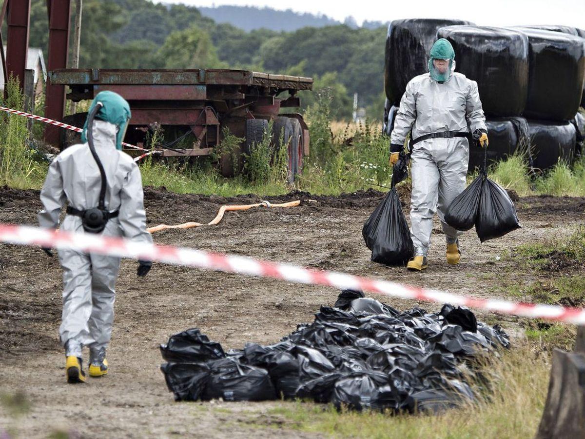 Konstateres der fugleinfluenza i opdræt, skal dyrene – som her – slås ned. (Arkivfoto: Henning Bagger/Scanpix 2016)