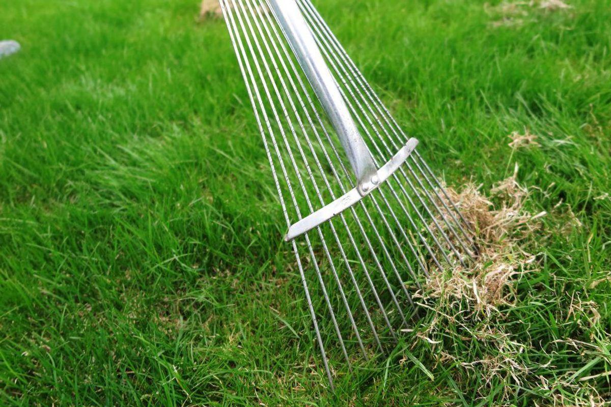 Du glemmer at vertikalskære. En anden fordel ved at vertikalskære græsset er, at du får fjernet ukrudt. Kilde: Reader's Digest. Foto: Scanpix.