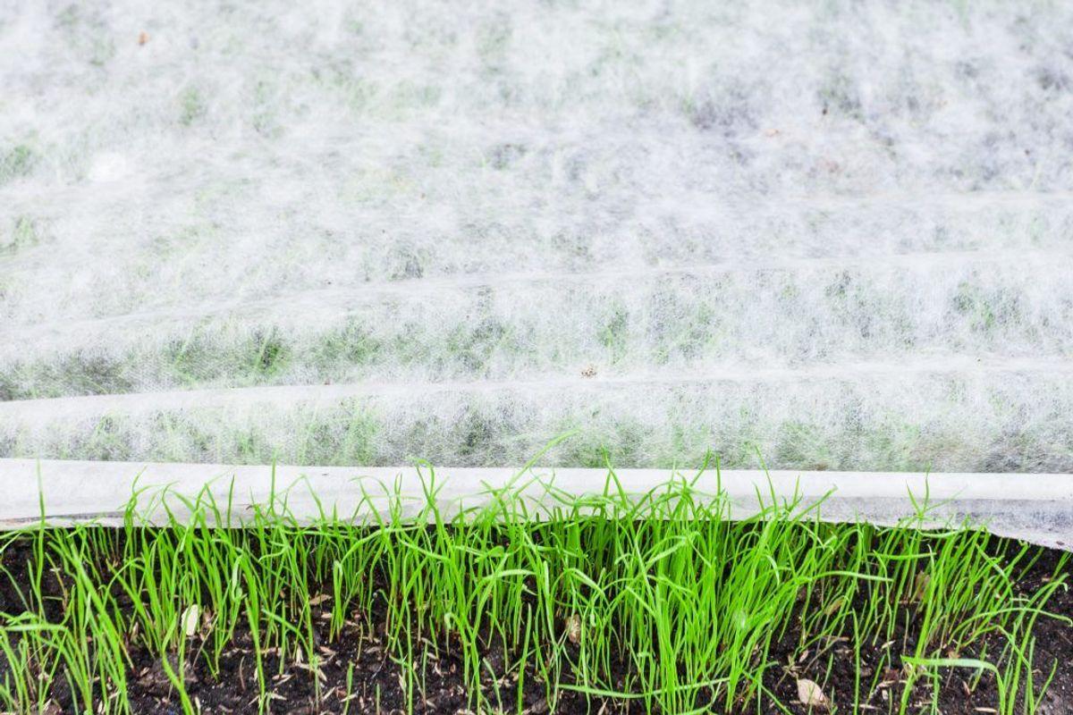 Et andet klassisk forebyggelsestrick er at sørge for, at du har lagt fiberdug ud, inden du sætter planter i dit bed. Kilde: Reader's Digest. Foto: Scanpix.