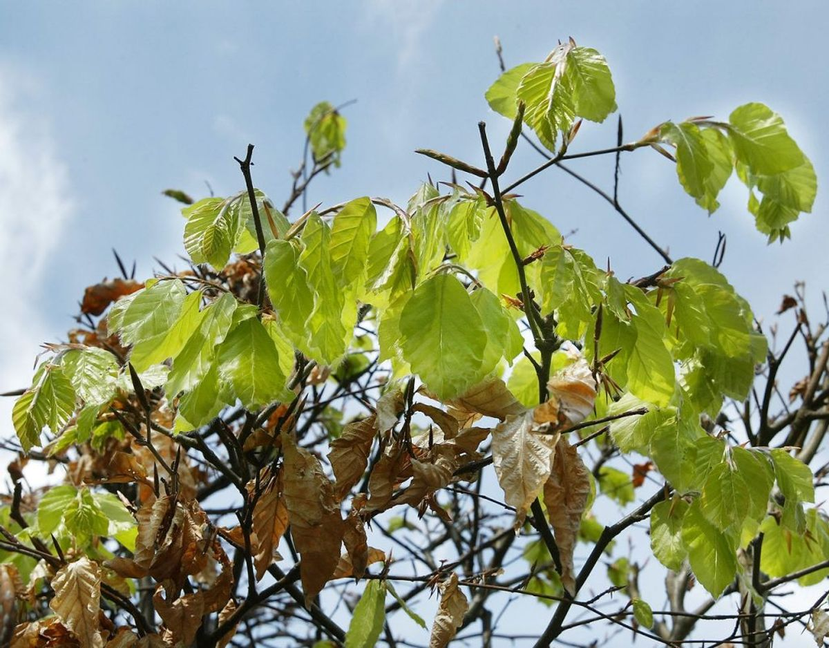 I oktober kan du med fordel plante løvfældende planter, mens det også er her der skal plantes ny hæk. Desuden er oktober også en god måned til at plante nåletræer. Kilde: Bolius Foto: Scanpix