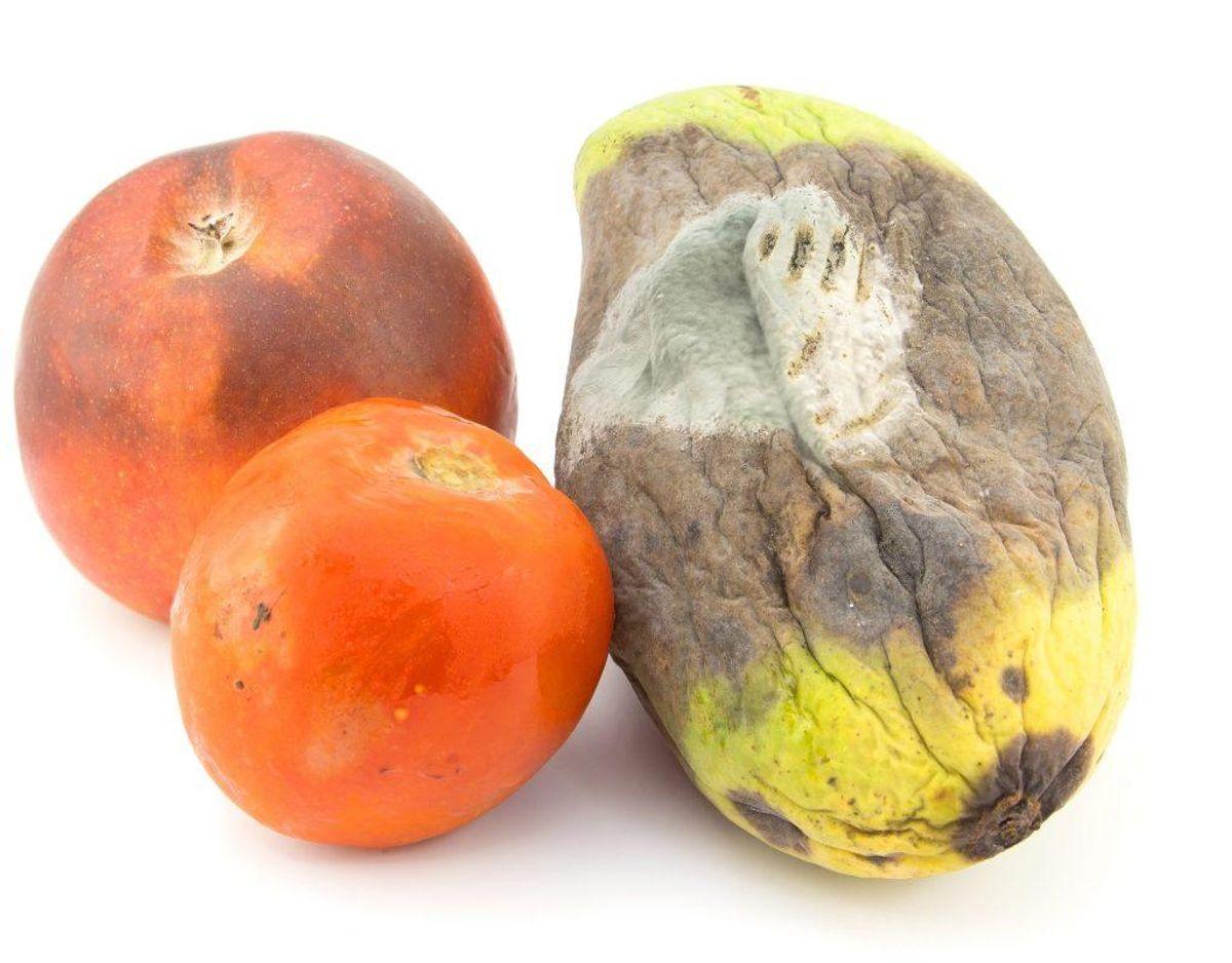 Fordærvede eller rådne fødevarer og affald: Opkast og diarre samt påvirkning af enkelte organer.