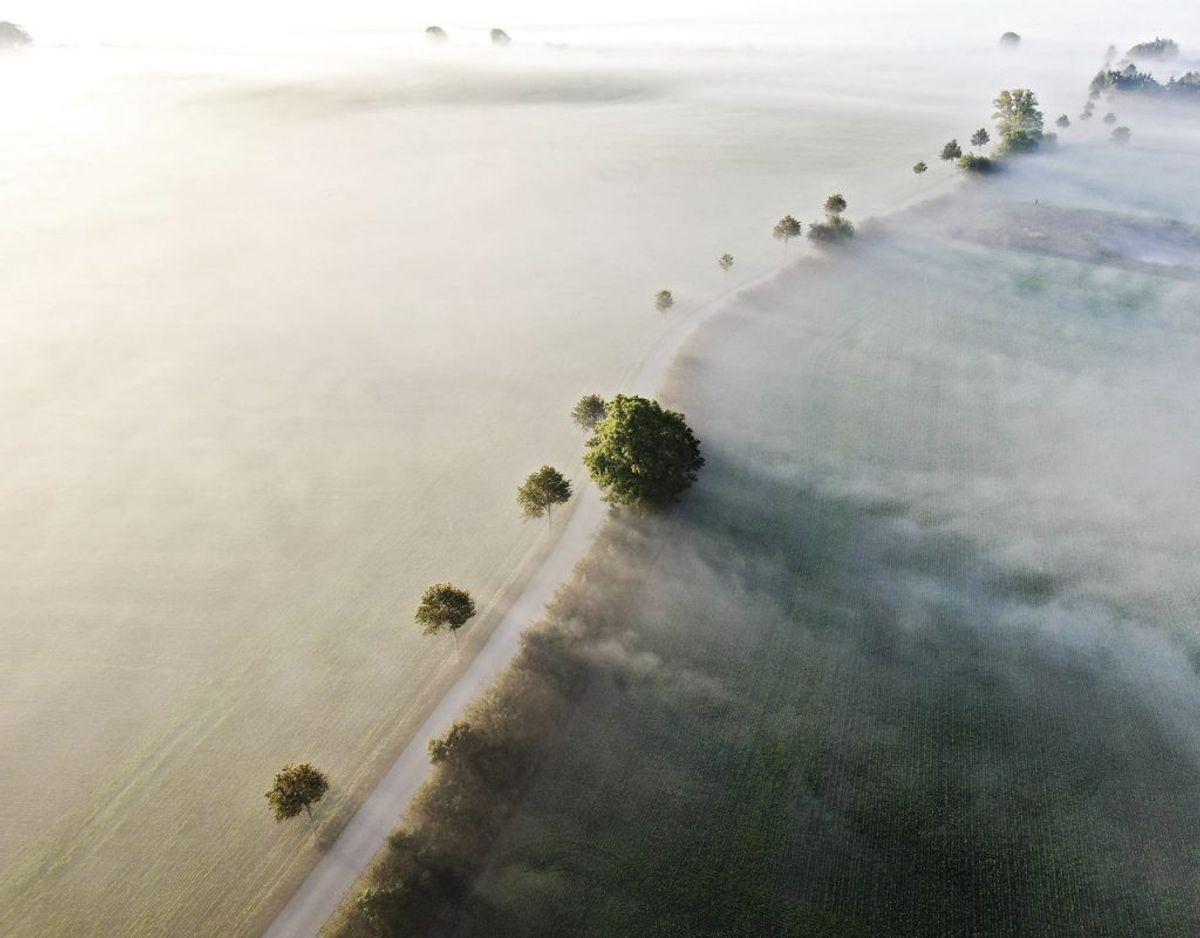 Her er det en vej ved Kværndrup på Sydfyn, der ligeledes er dækket af tåge. Foto: Michael Bager/Ritzau Scanpix.