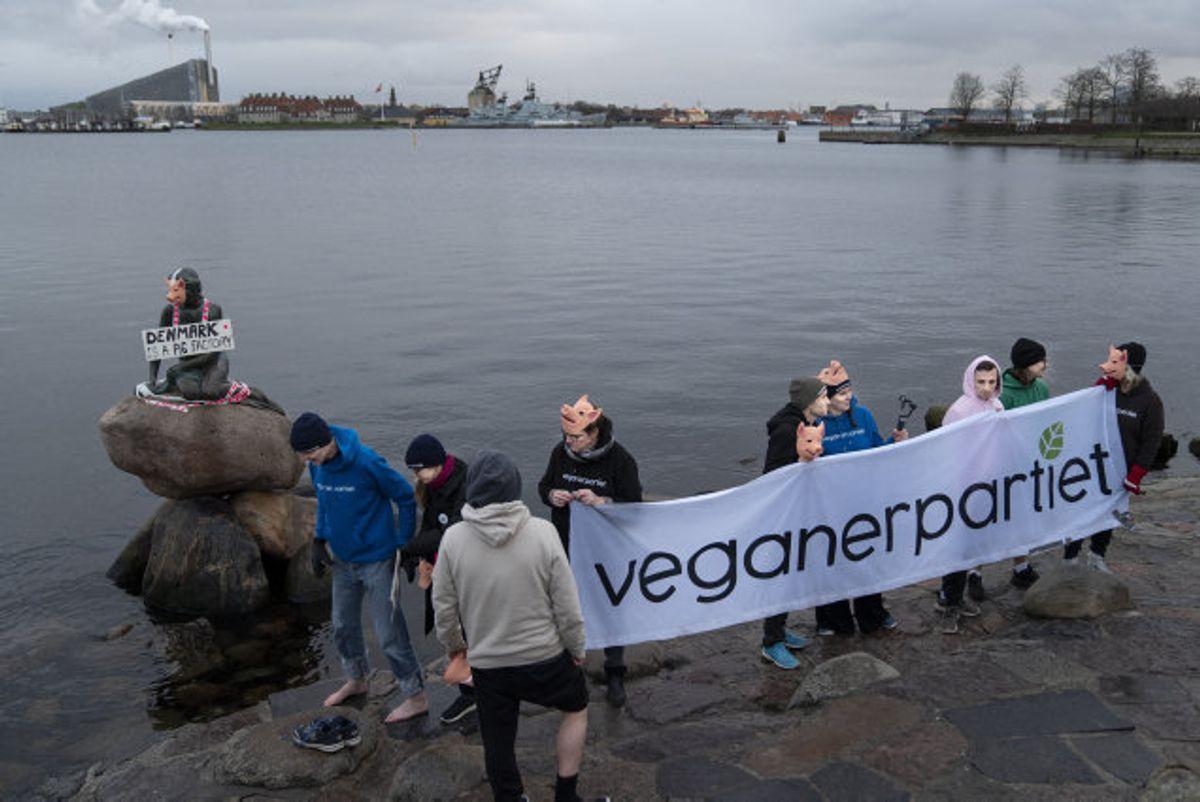 Vælgerne kan stemme på Veganerpartiet ved næste folketingsvalg. (Arkivfoto). Foto: Liselotte Sabroe/Scanpix