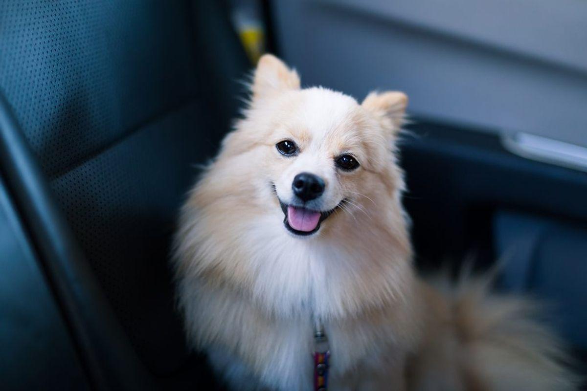 Undlad som hovedregel at efterlade hunden alene i en varm bil. Det tager altid længere tid at handle, end du beregner. Lad derfor din hund blive hjemme, hvis alternativet er, at den skal sidde alene i bilen.