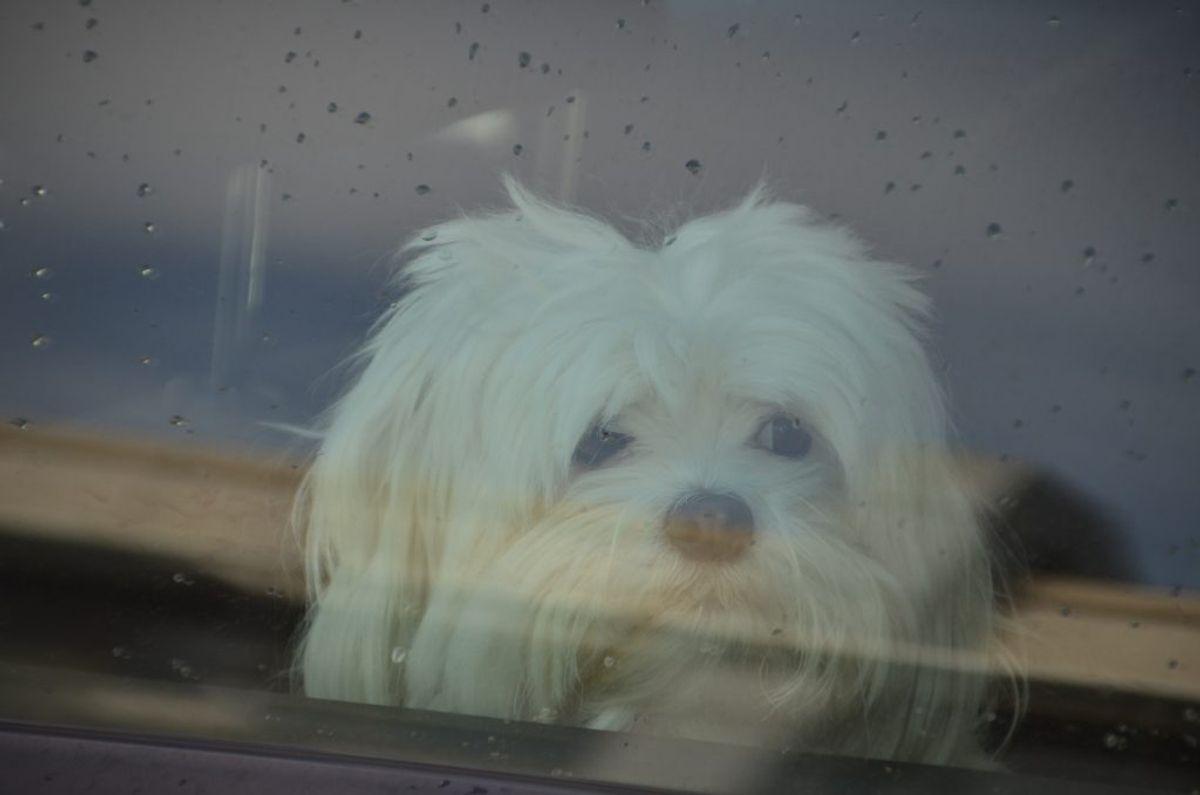 Hvis du absolut må efterlade hunden i bilen, så parker i skyggen, åbn vinduer, og efterlad også en note med klokkeslæt og dit telefonnummer, så forbipasserende kan få fat i dig, hvis de bliver bekymret for din hund.
