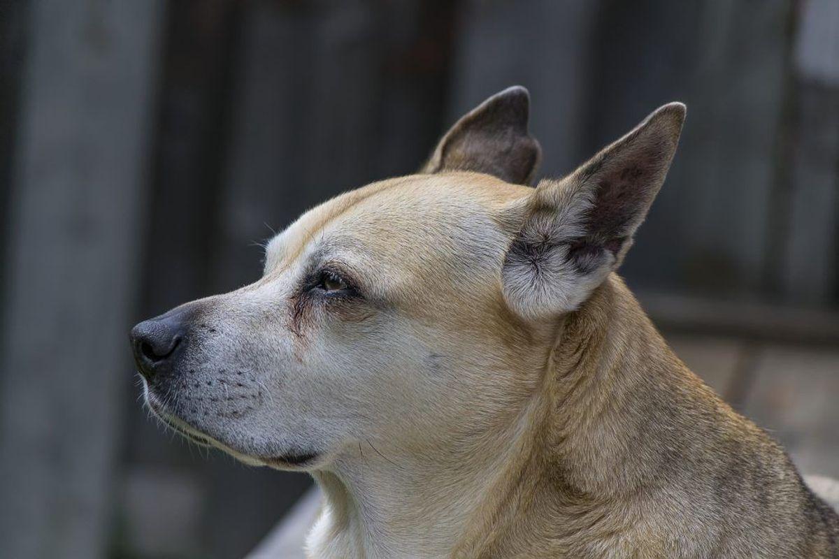 Nummer et: Blandingshund. Kilde: Agria Dyreforsikring. Arkivfoto.