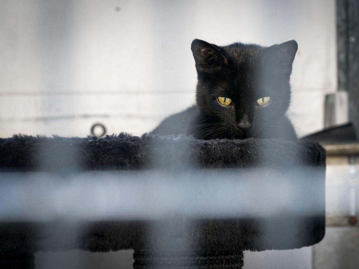 På de otte internater er der lige nu 1.400 efterladte kattekillinger. Foto: Ida Marie Odgaard/Ritzau Scanpix.