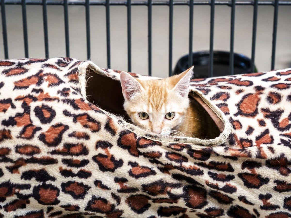 Det skyldes i høj grad at mange katteejere ikke tager ordentligt ansvar for deres kat. Foto: Ida Marie Odgaard/Ritzau Scanpix.