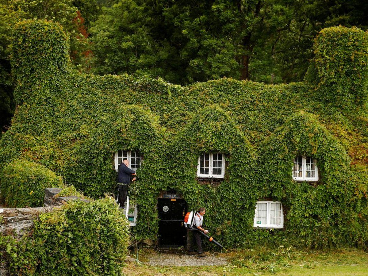 """Huset, der er dækket af slyngplanter ligger i Wales i Storbritannien og hedder """"Tu Hwnt ir Bont tea room"""" og er bygget i 1500-tallet. Foto: Scanpix."""
