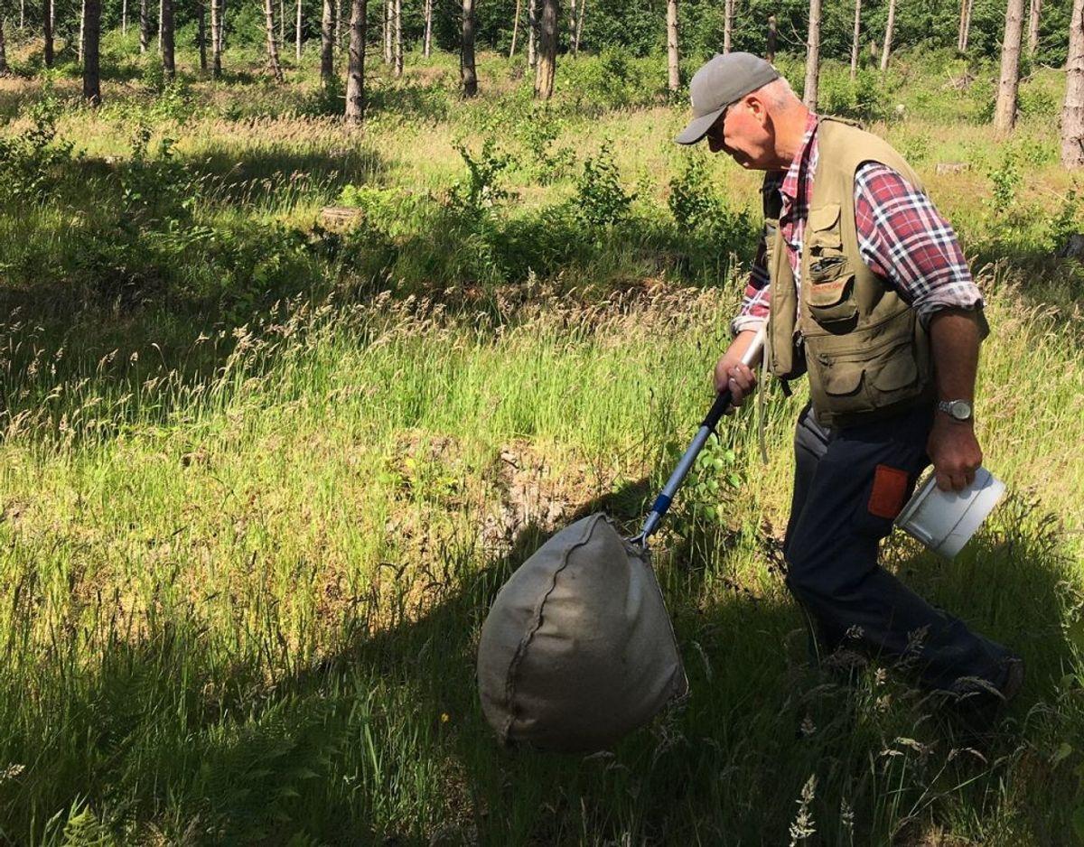 Henning Liljehult entomolog er sammen med Jan Pedersen nede i Bøtøskoven for at lede efter den nye billeart, Amara kulti. Foto: Jan Pedersen.