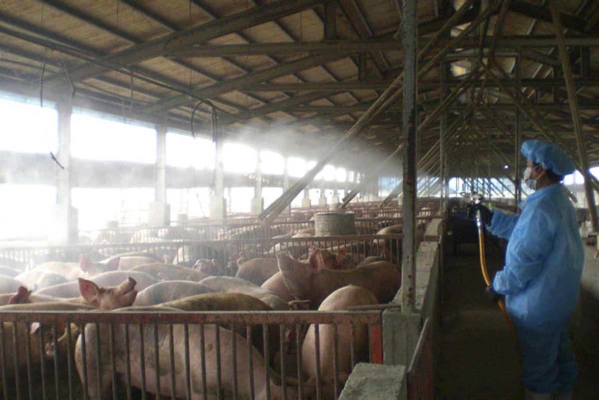 Det nye virus er fundet blandt mennesker, der har arbejdet på slagterier i Kina. (Arkivfoto). Foto: Ho/Reuters