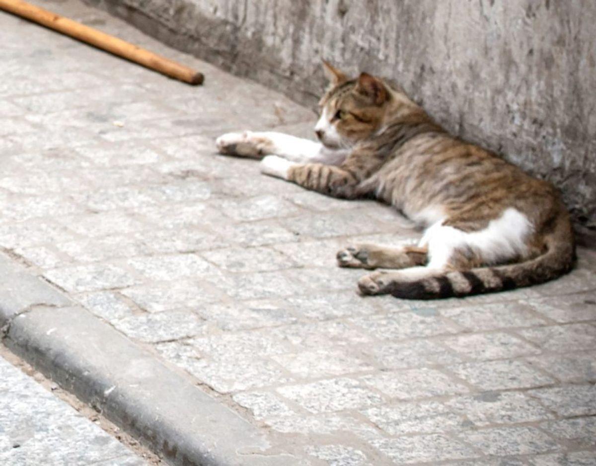 Katte går i billige rottefælder – og så dør de. Arkivfoto: Scanpix