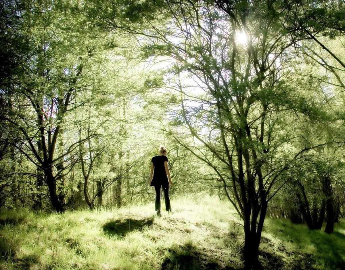 Mange har prøvet at finde en flåt efter en gåtur i skoven eller gennem højt græs. Klik igennem galleriet og se, hvad man skal gøre, hvis man er blevet ramt af et flåtbid. Foto: Scanpix