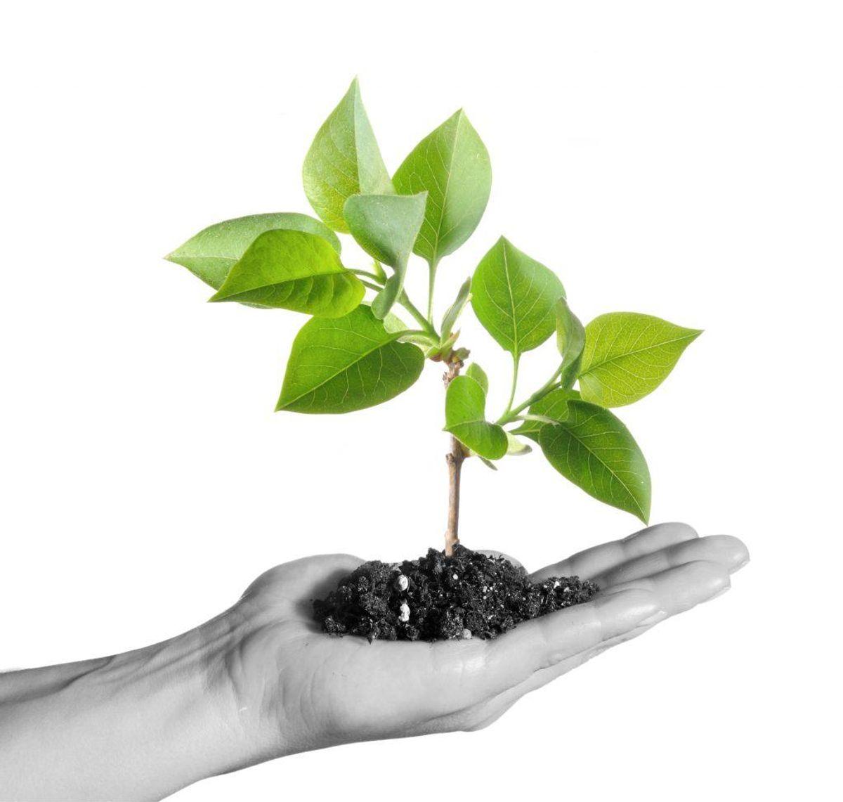 Noget så simpelt som at plante et enkelt træ, kan gøre en forskel. Kilde: Good Housekeeping. Arkivfoto.