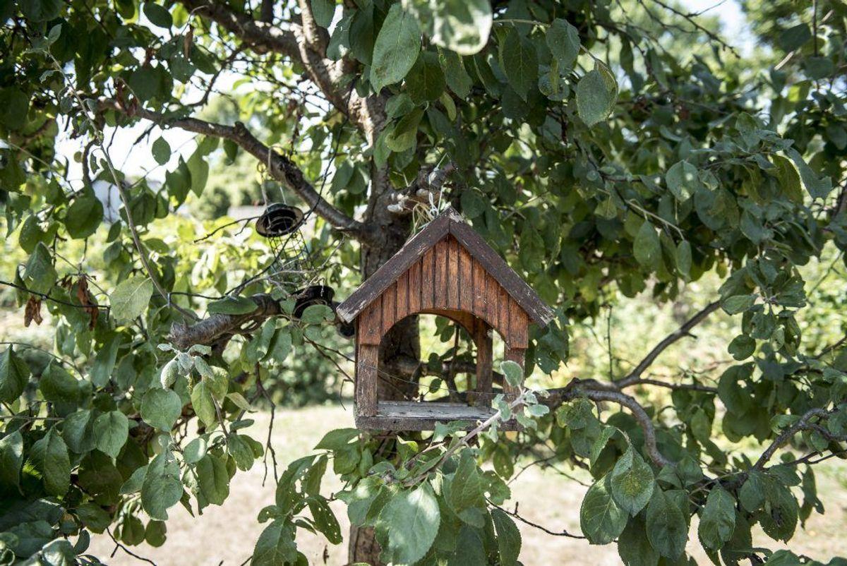 Gør det nemmere for fuglene med et foderbræt. Kilde: Good Housekeeping. Arkivfoto.