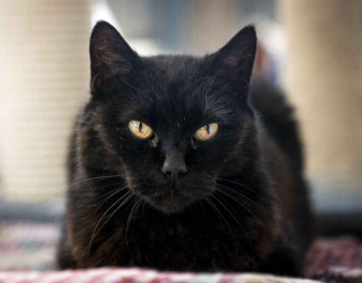 Træt af strejfende katte? Klik og læs, hvordan du kan få dem til at forsvinde fra din grund. Foto: Scanpix