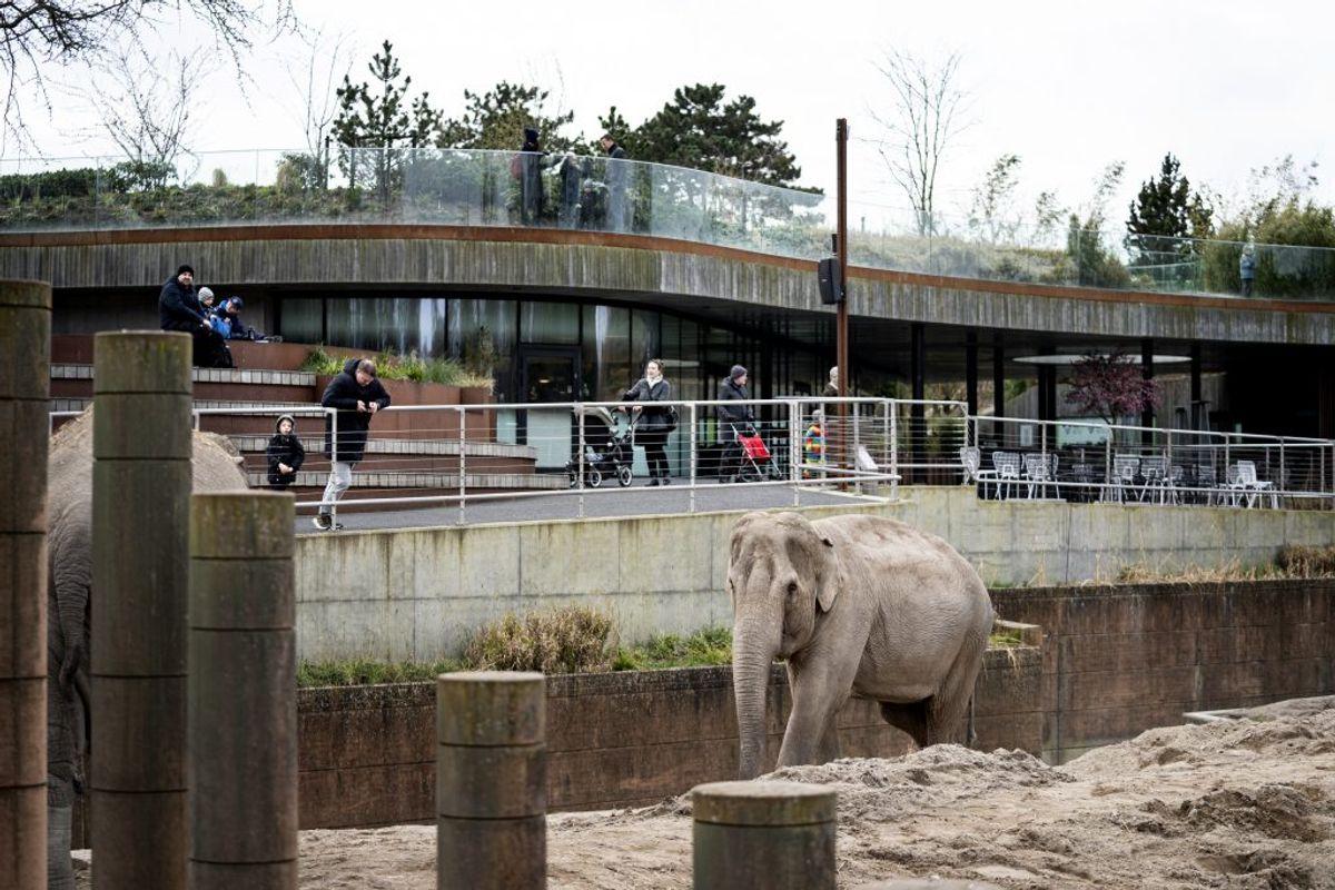MÅ ÅBNE STRAKS: Zoologiske haver og botaniske anlæg (skulle have ventet til fase 3, som begynder 8. juni)  (Foto: Ida Guldbæk Arentsen/Ritzau Scanpix)