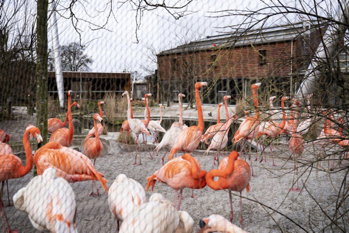Zoologiske haver i Danmark kan igen åbne som et led i udvidelsen af genåbningens fase 2. KLIK VIDERE OG SE, HVAD DER ELLERS KAN ÅBNE. (Arkivfoto) Foto: Ida Guldbæk Arentsen/Scanpix