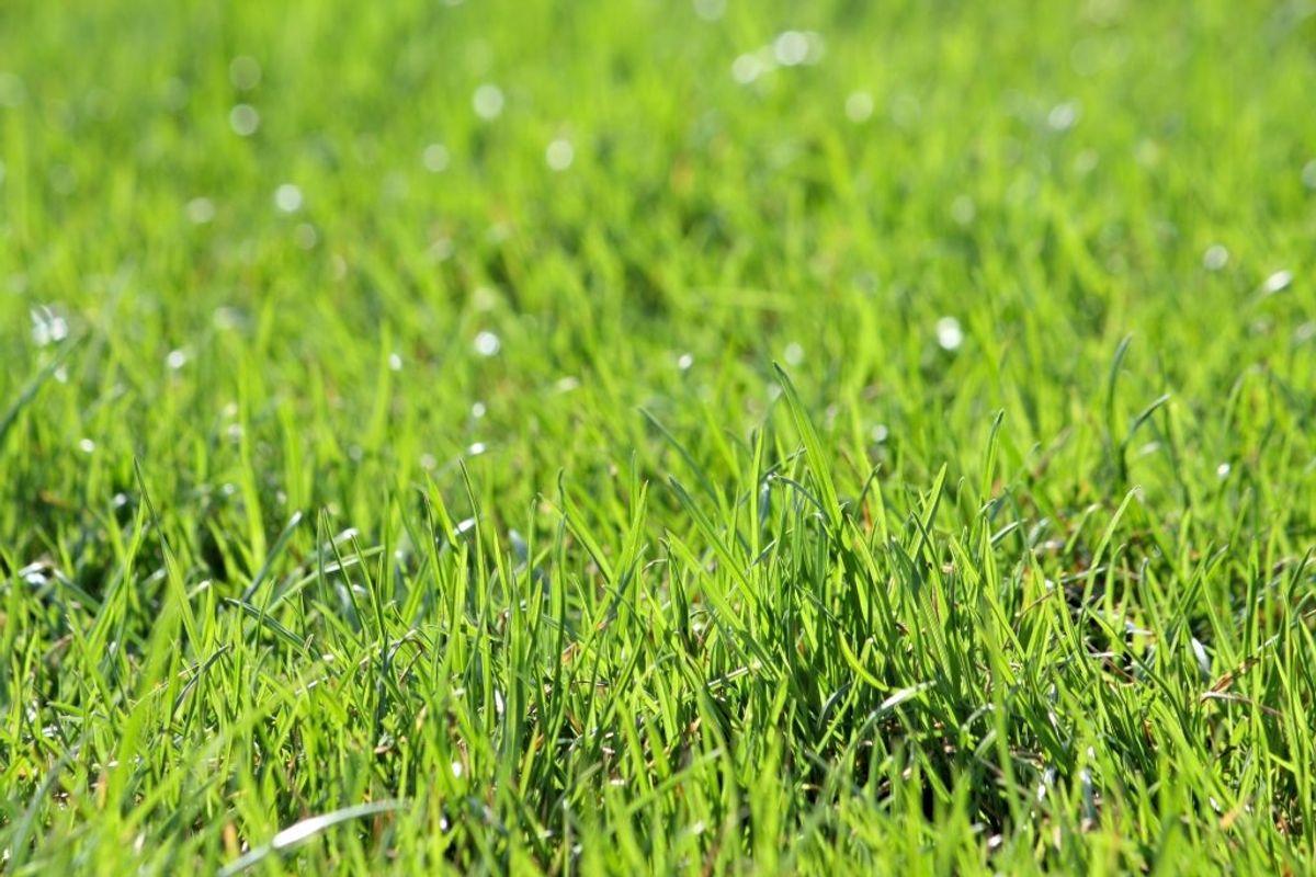 Vil du gerne have den perfekte græsplæne til sommer? Så klik igennem galleriet for at få tips til, hvordan du opnår det.