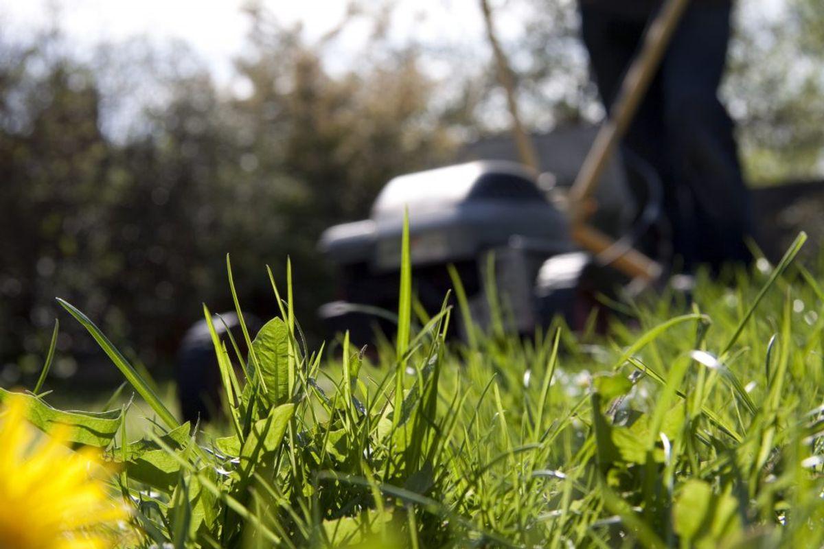 Bare pletter kan blive sået med nye græsfrø.