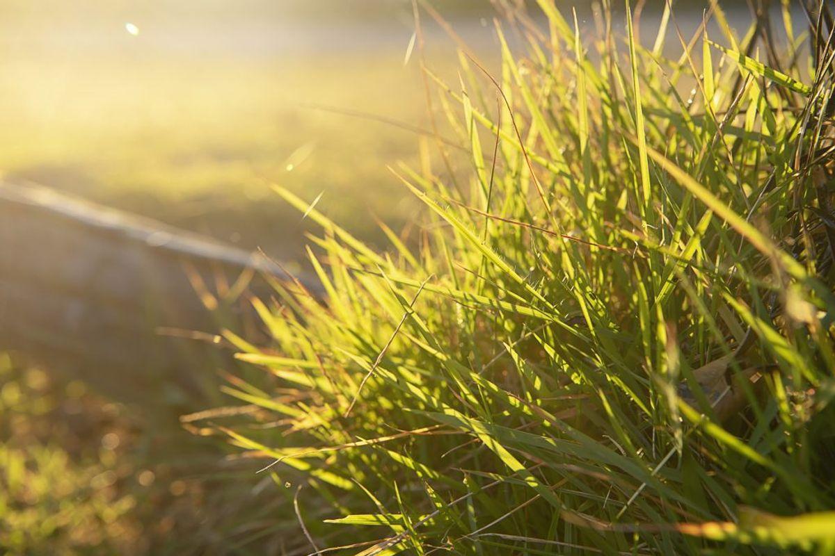 Nu er der bare tilbage at vente og nyde din flotte græsplæne.