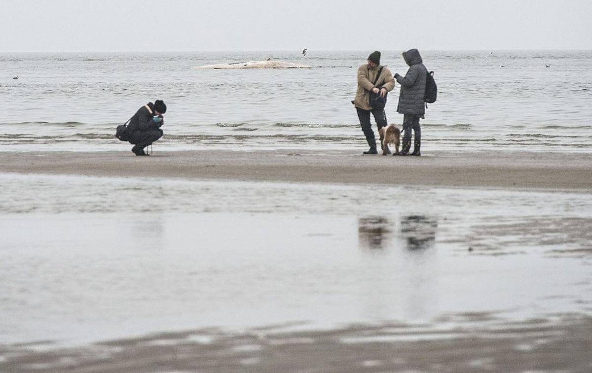 Flere fanniker vil have turisterne til at blive væk fra øen under krisen. (Foto: Claus Fisker/Scanpix 2015)