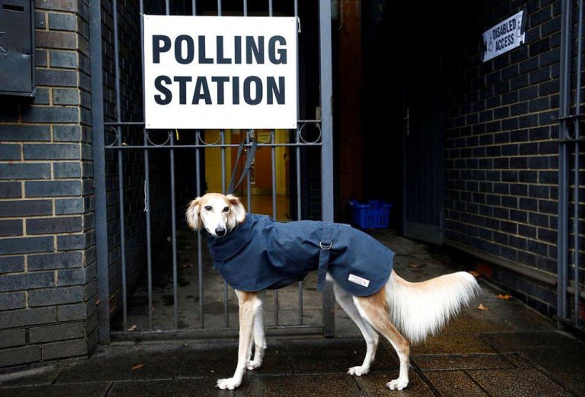 Der er massevis af hunde, der er taget med til valg. Foto: Scanpix