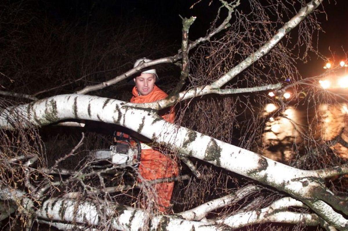 Der varsles vind af orkanagtig styrke over hele lander fredag 17. dec. 1999. Billedet er fra orkanen for to uger siden, hvor en Falckmand rydder vejen mellem Haslev og Ringsted for et knækket birketræ. NORDFOTO/ Søren Steffen 1999