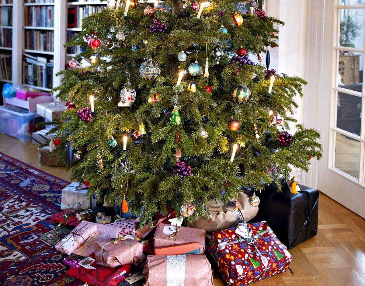 Juletræet udgør en meget lille del af din udledning i julen. Concito anslår, at du øger din udledning med 200 kilo CO2 i julen, og her tegner træet sig kun for omkring fem procent. Foto: Scanpix