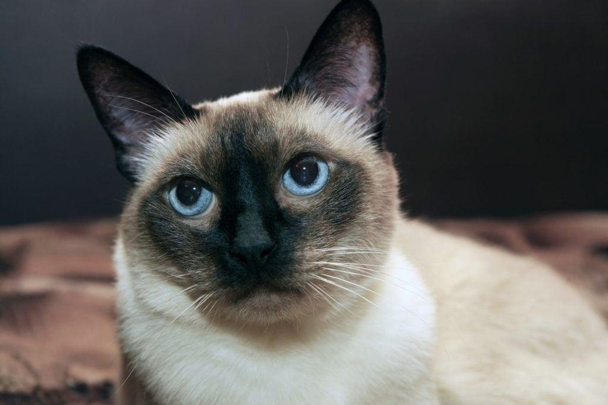 Alene det at se kattevideoer er sundt, viste et studie i 2009. Det giver mere energi og sunde tanker, mens negative følelser forsvinder.