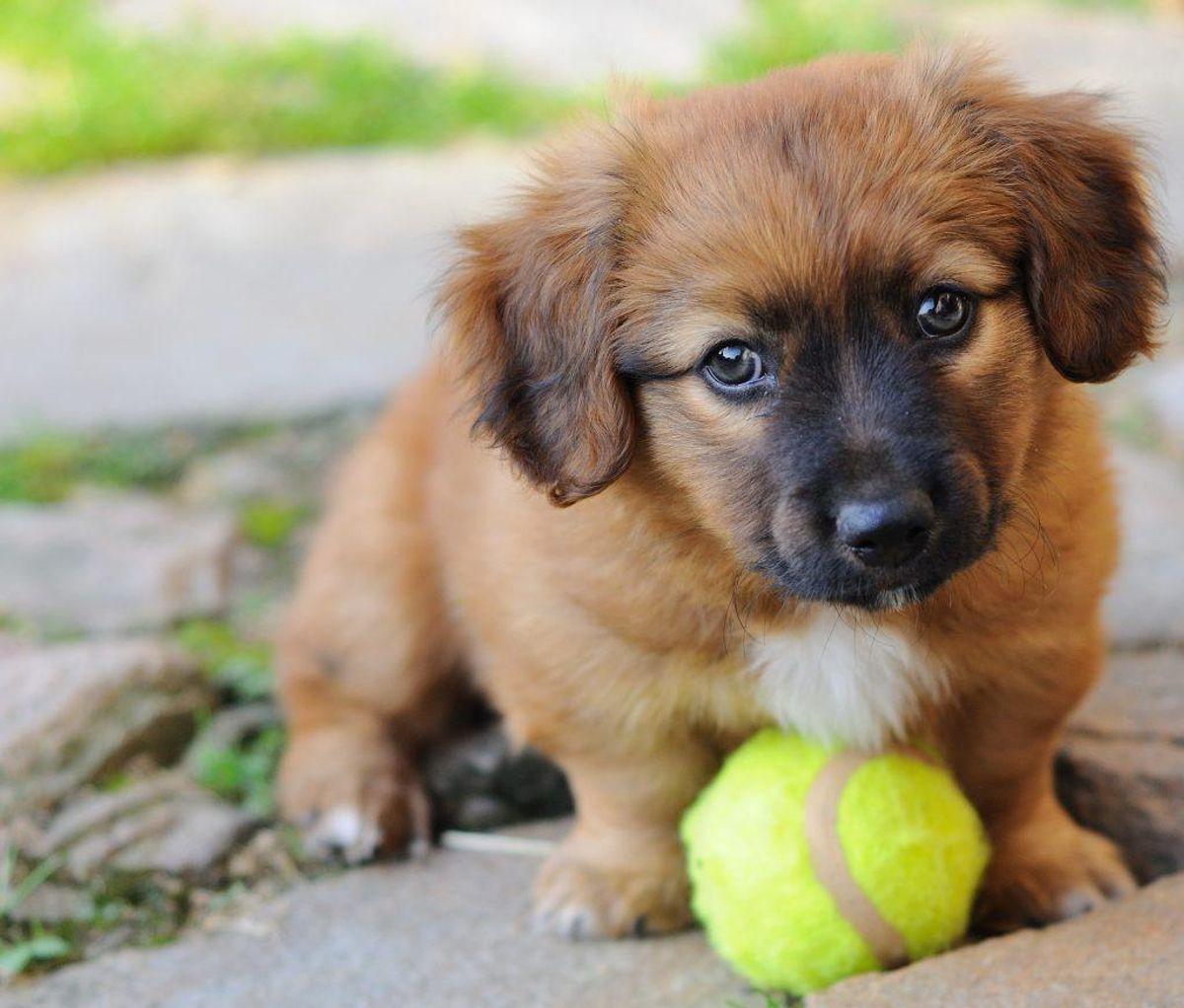 """En ny metaanalyse af fire millioner mennesker viser, at alene det at eje en hund nedsætter """"risikoen for død"""" med 24 procent."""