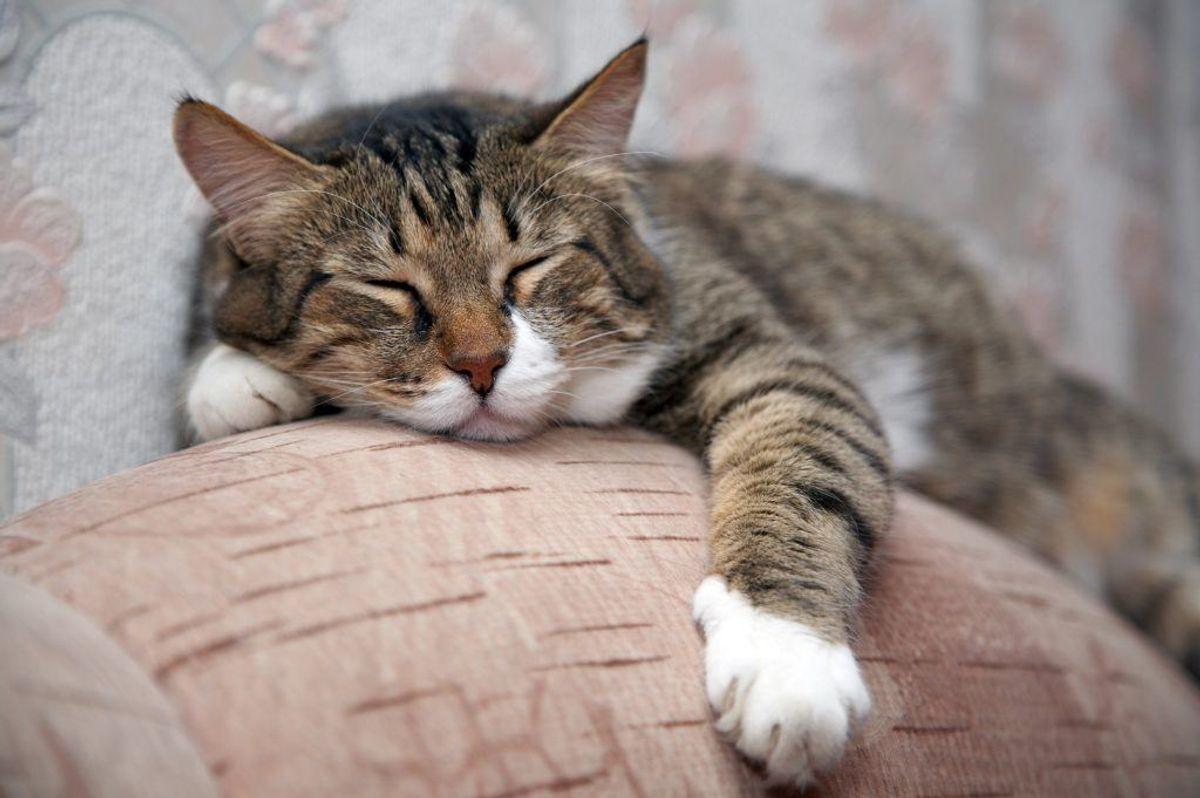 Et studie fra 2009 viste, at katteejere (og tidligere katteejere) har lavere risiko for at dø af hjertekarsygdomme.
