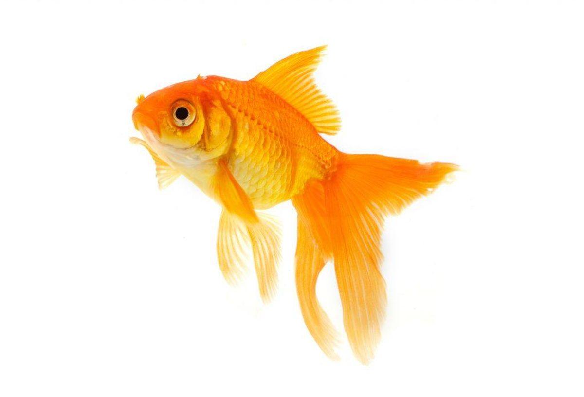 Et studie fra 2015 viste, at teenagere med type 1 diabetes, der blev sat til at tage sig af fisk efter tre måneder også var blevet bedre til at administrere deres sygdom.