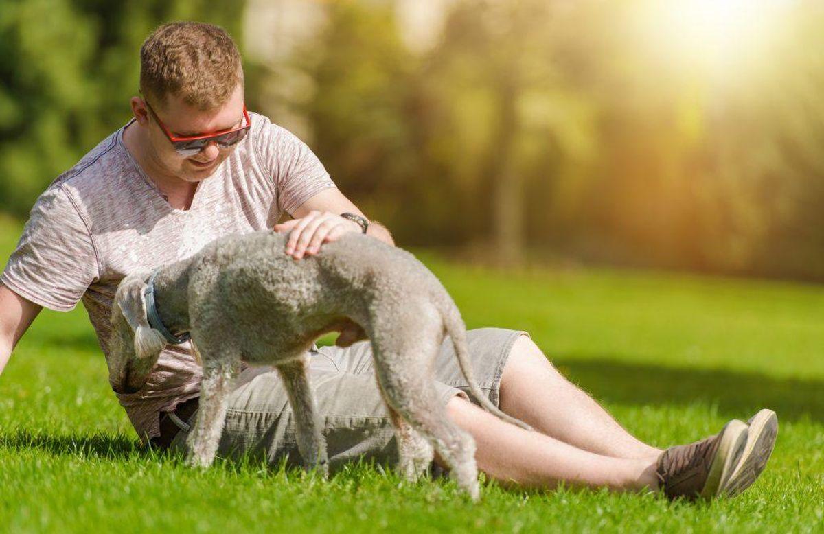 Kæledyr giver ensomme flere chancer for at være sociale. Det er en nøgle til et længere -og lykkeligere – liv.