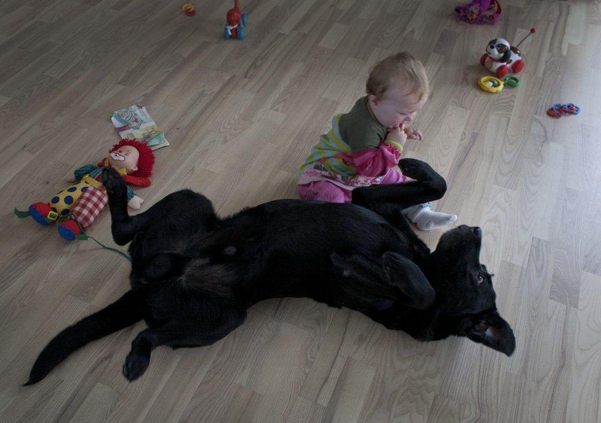 Spædbørn, der er i kontakt med kæledyr i løbet af deres første seks måneder, menes at have lavere risiko for at være astma og allergier.