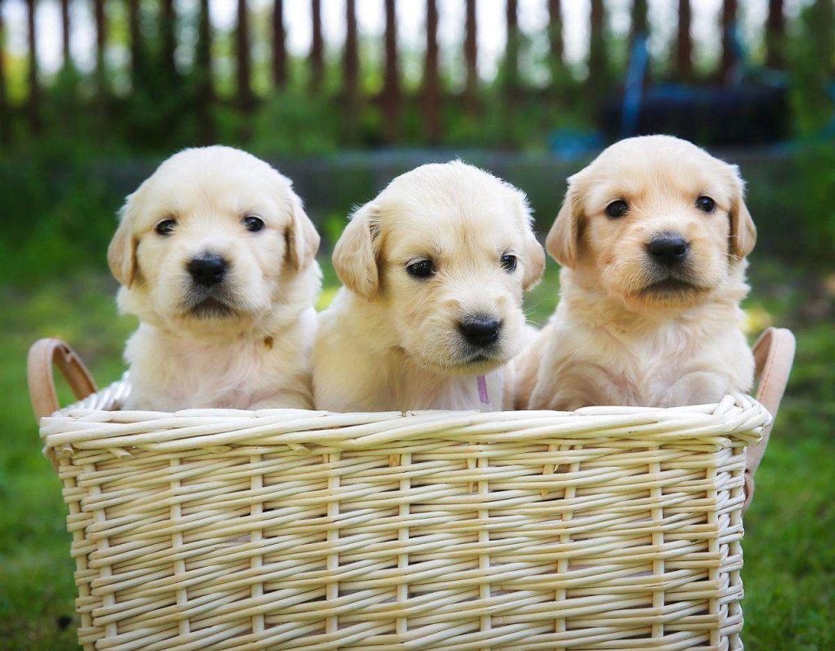 Når du skal vælge den helt perfekte hund til dig, så skal du faktisk tænke over, hvad du kan tilbyde hunden. Klik videre for flere billeder. Foto: Scanpix