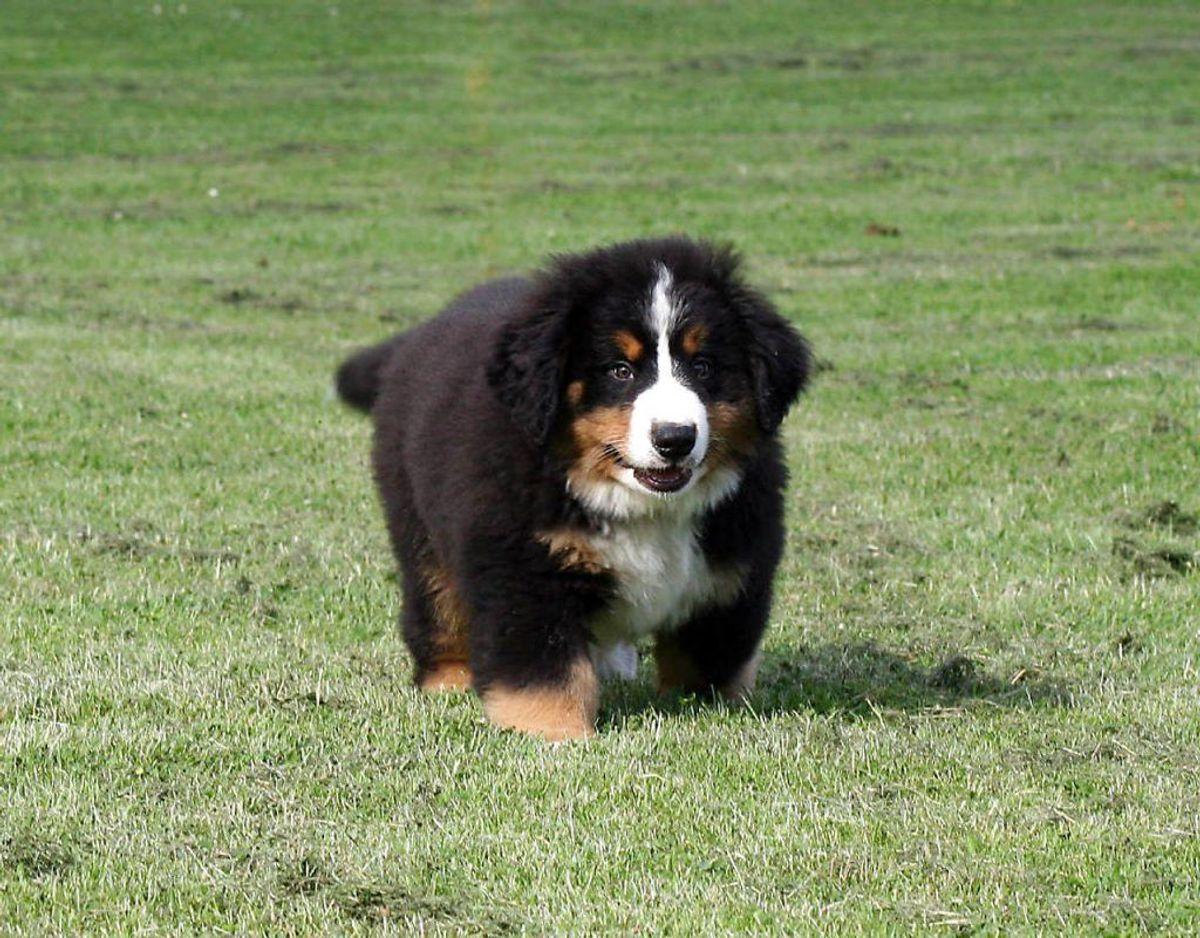 Når du vælger, hvilken hund du skal have, er det vigtigt at du tænker langsigtet, for hunden har du i hvert fald i 10 år. Foto: Scanpix